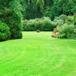Summer garden with green lawns
