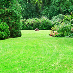 Summer garden with green lawns